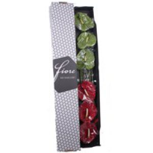 svr-fdc-fs01kbtprofotofleuraanthuriumanth.fiore-six-pack-redgreen-mix